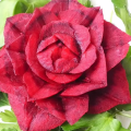 карвинг роза свекла